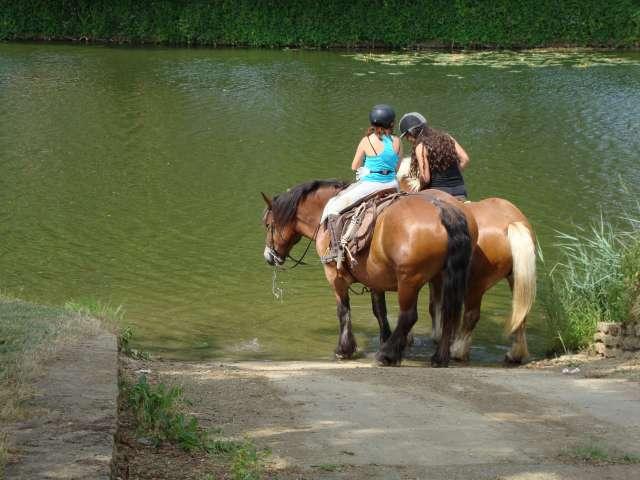 Equestrian centers