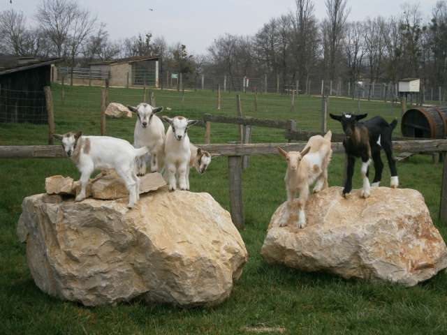 Animal parc, educational farm