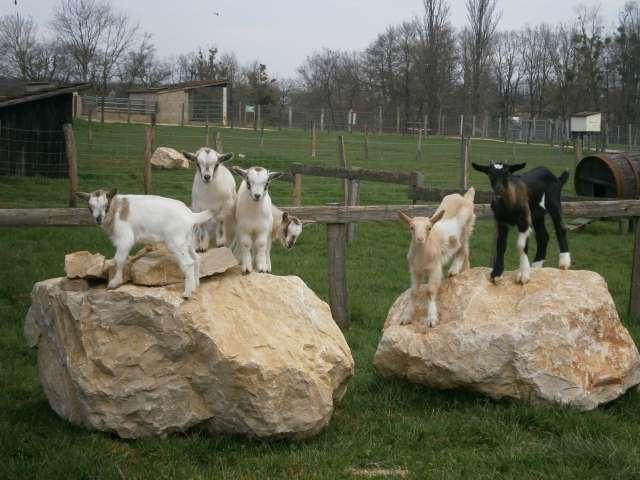 Parc Animalier, Ferme Pédagogique