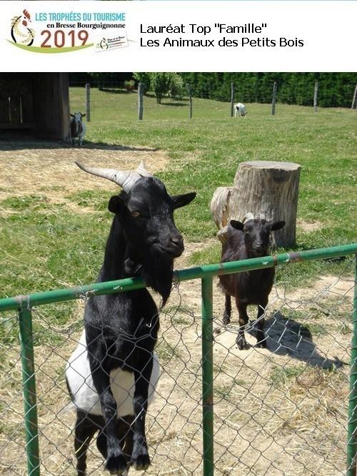animaux-des-petits-bois-212