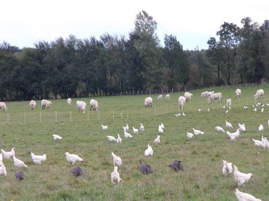 Volailles de Bresse AOC-AOP - Office de Tourisme du Pays de la Bresse Bourguignonne