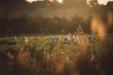 Elevage de volailles de Bresse - Le Devant
