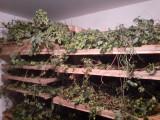 Séchoirs à houblon
