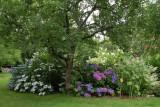 Les Hydrangeas © Jardin Beauvoir