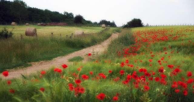 paysage-bressan-amedee-de-almeida-112774