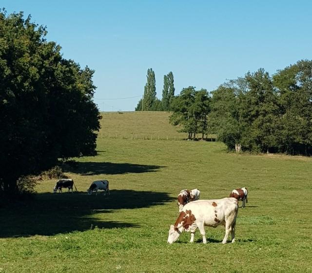 prairie-montpont-en-bresse-balade-verte-209131