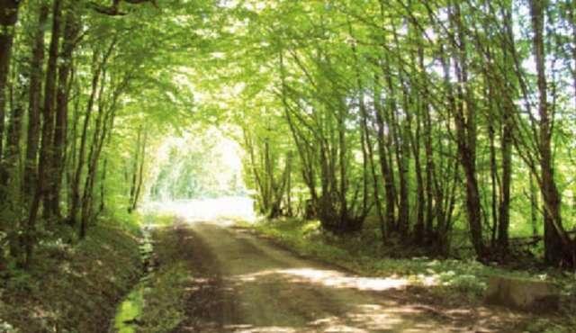 Sentier des Grands Bois - Ville de Louhans-Châteaurenaud