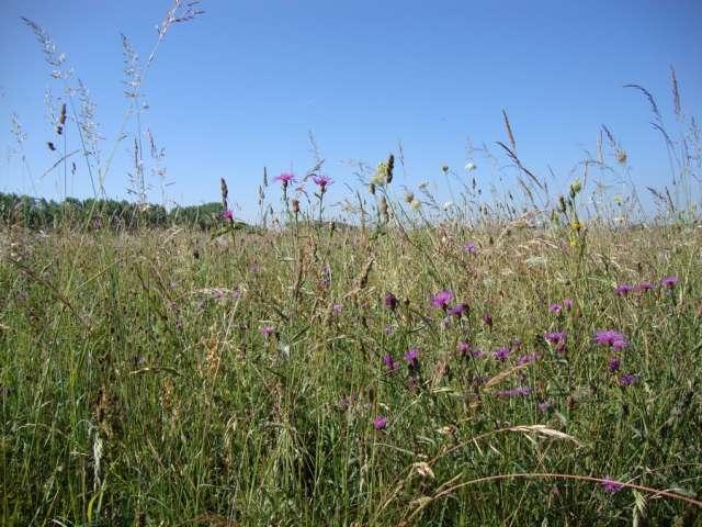 Sentier Nature - Office de Tourisme du Pays de la Bresse Bourguignonne