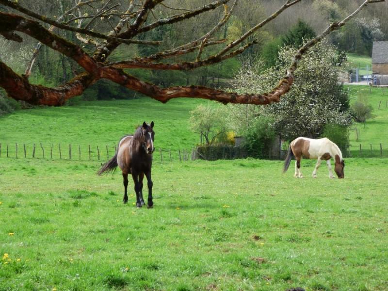 chevaux-cuiseaux-179870