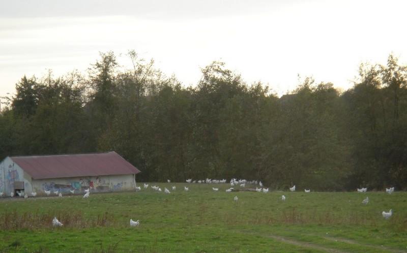 poulets-montagny-2-otsi-181171