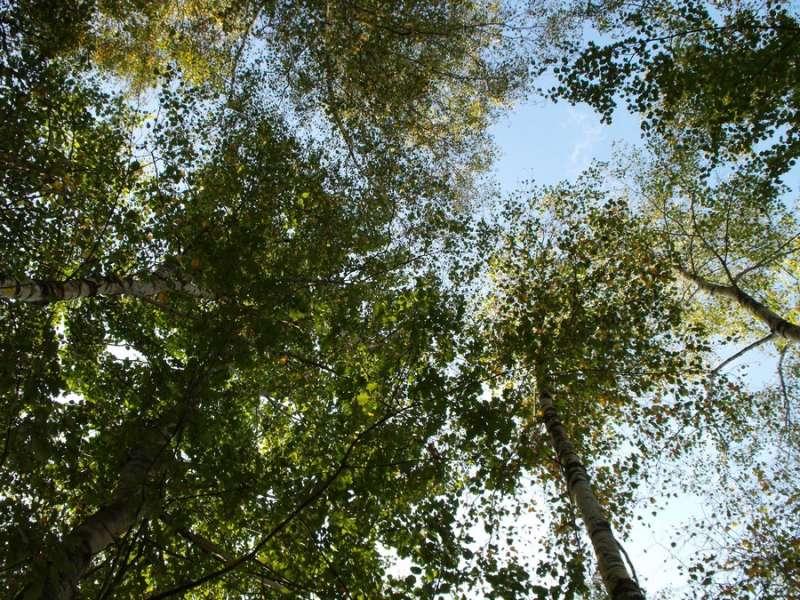 Sentiers - Espaces Naturels Bourguignons - Office de Tourisme du Pays de la Bresse Bourguignonne