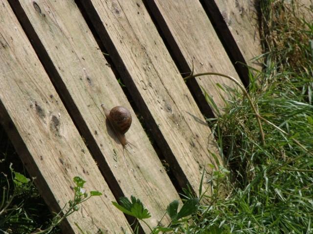 Ferme de la Viennette - Escargot © OTPBB